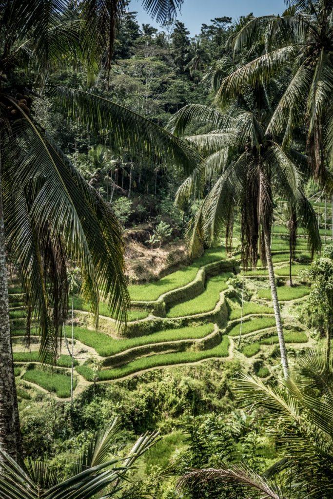 Ubud travel