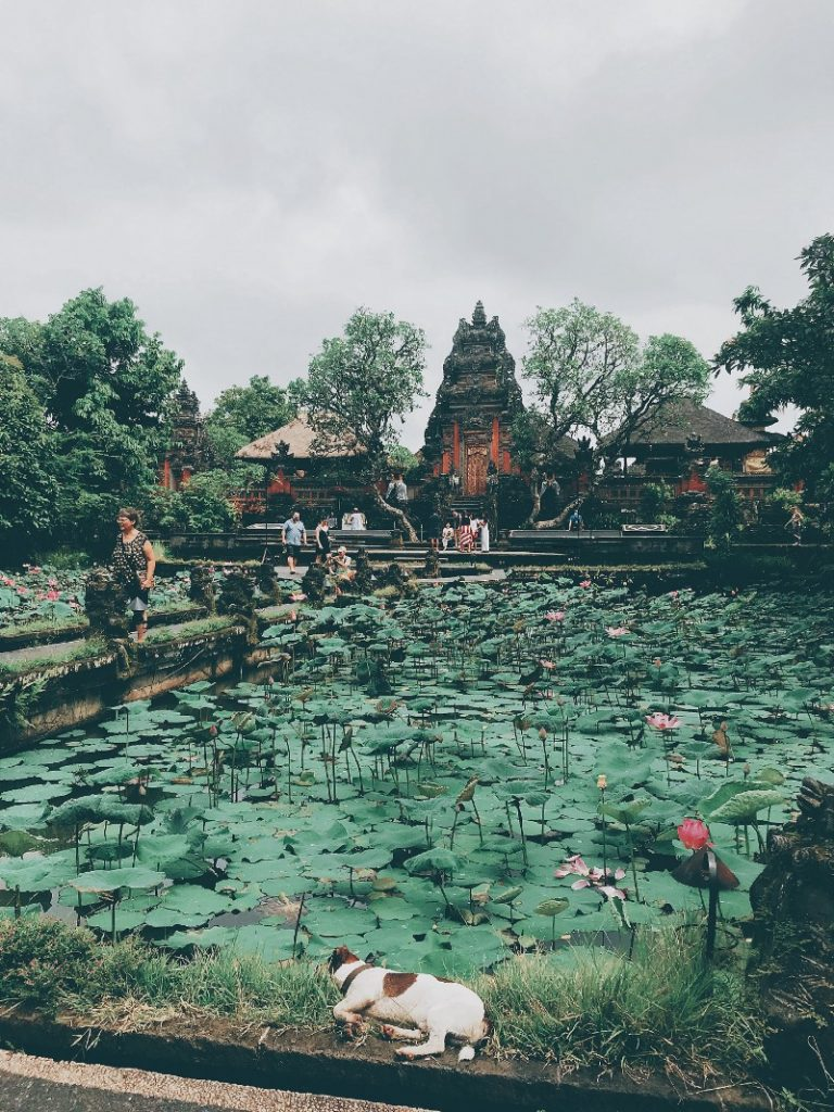 The magestic Lotus Pond