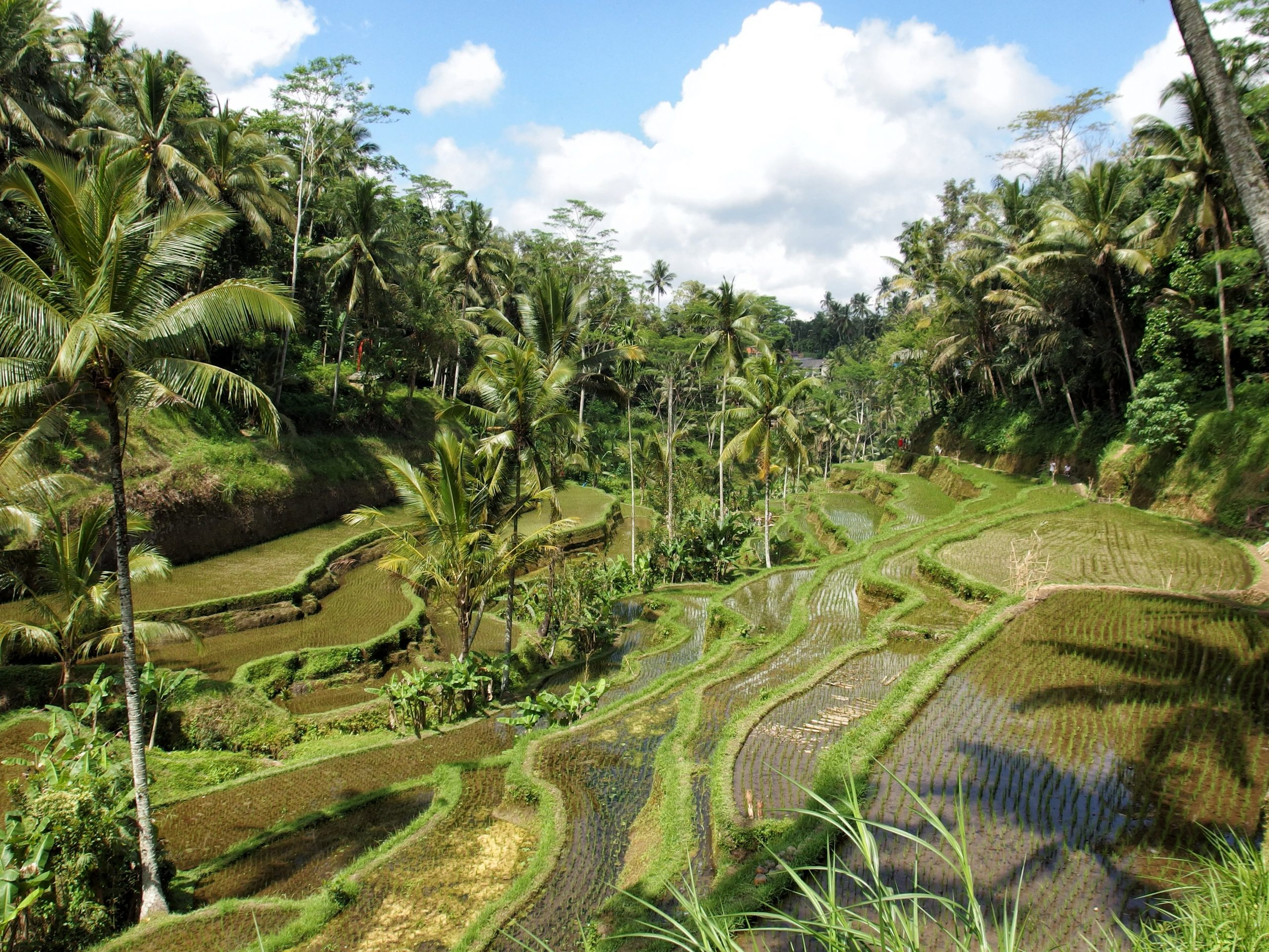 Best Ubud Activities Guide: What to Do When in Ubud?